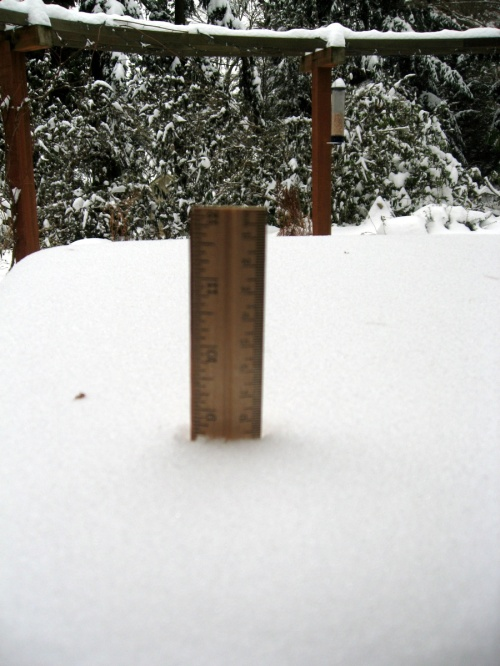 Snow level on Mercer Island